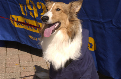 24314 WVU BUSINESS COLLEGE TARGET DOG LOOK ALIKE CONTEST