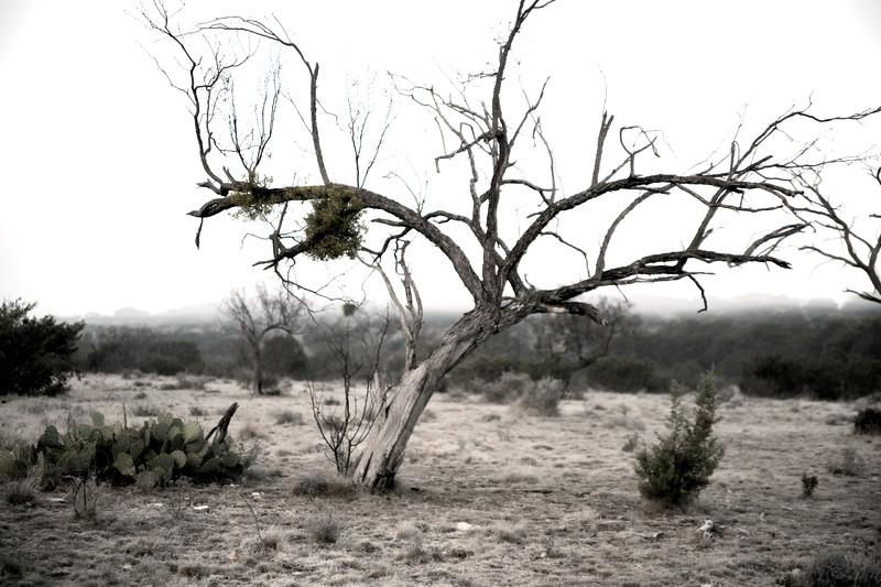 2009-12-13 Ozona Tree 1043.jpg
