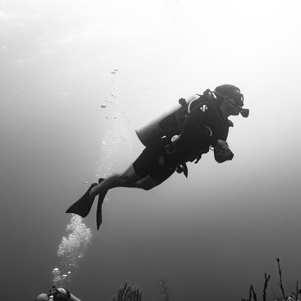 Scuba diver underwater, Three Amigos, Turneffe Atoll, Belize Barrier Reef, Belize