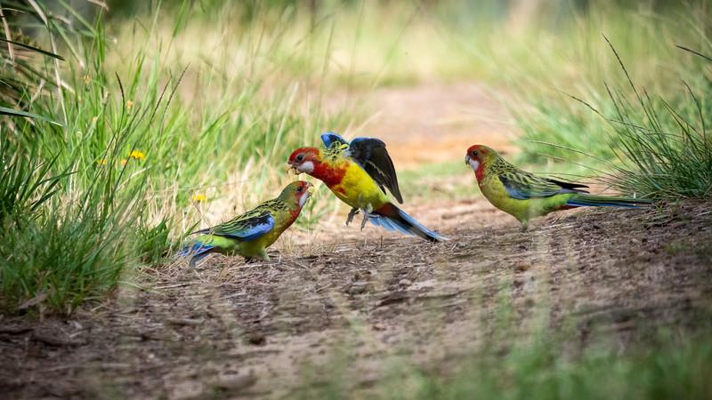 122118  birds  _1.JPG