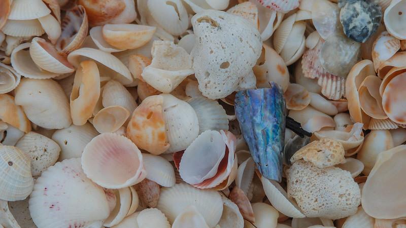 Gasparilla Island sea shells