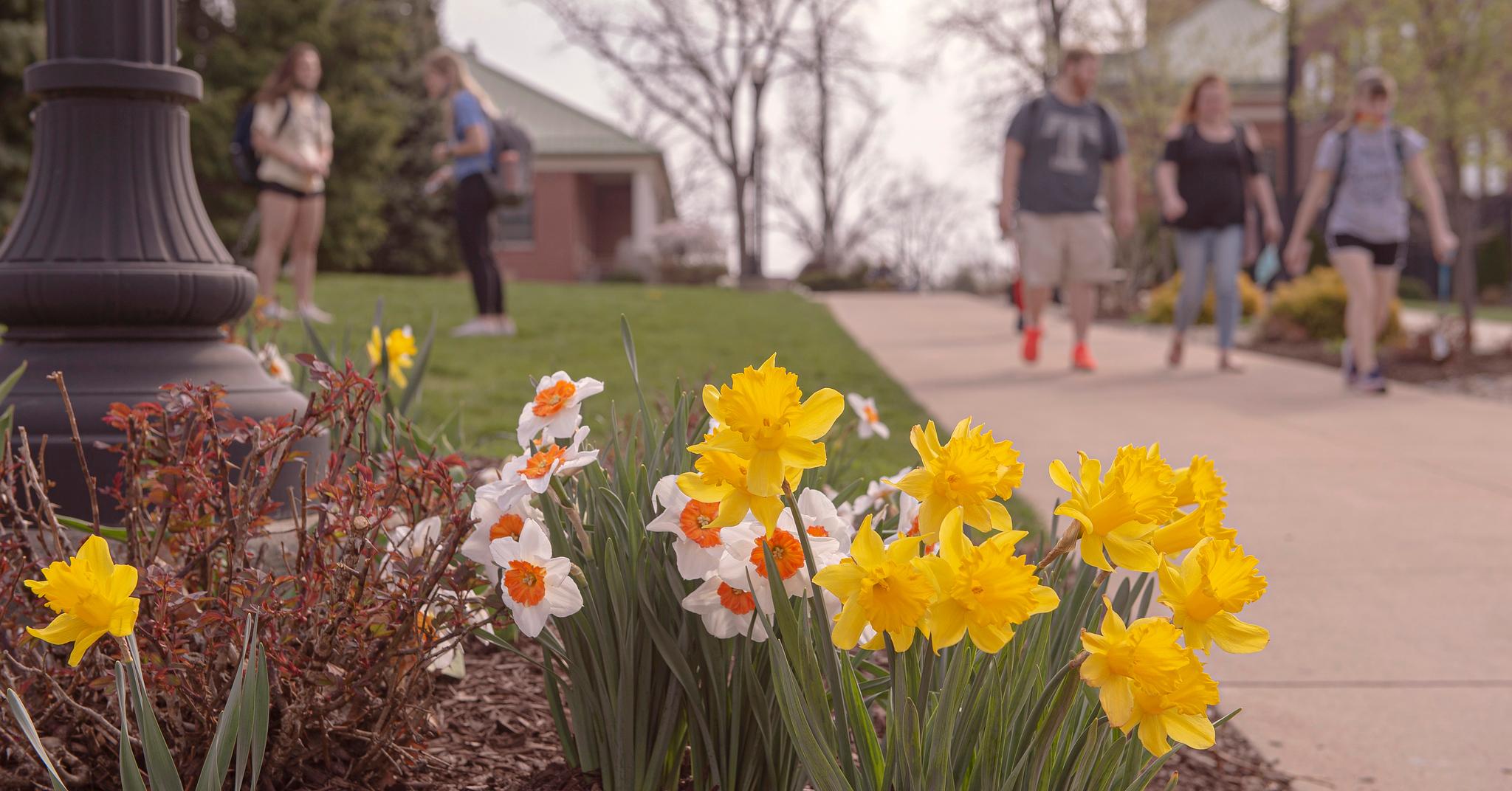 spring_flowers_UC_walkway_ND4_2314.jpg
