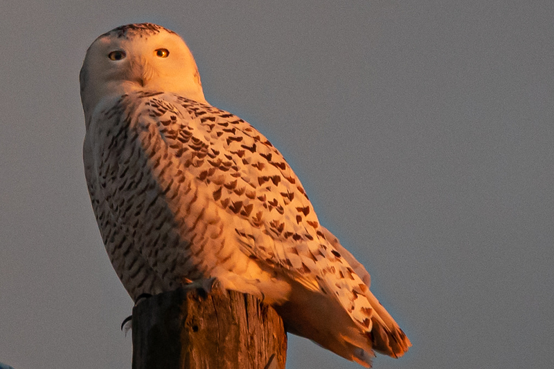 owls-104.jpg