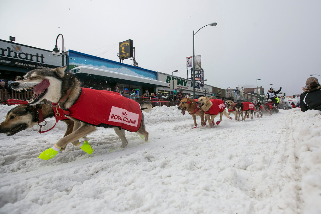 . Ed Stielstra\'s team charges out of the start gate on 4th Avenue during the ceremonial start to the Iditarod dog sled race in downtown Anchorage, Alaska  March 2, 2013.   REUTERS/Nathaniel Wilder