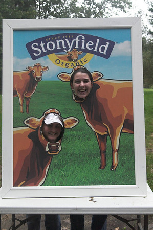 Stonyfield Cows
