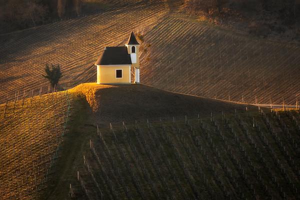 Styrian vineyards