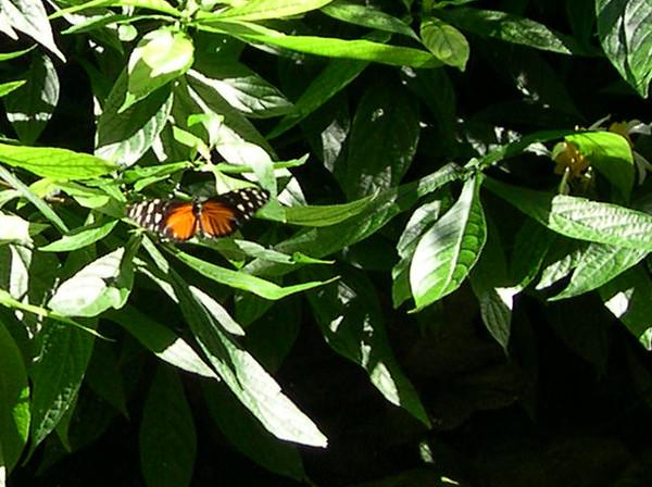 butterfly420.jpg