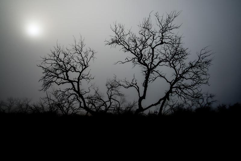 Foggy Morning Mesquite