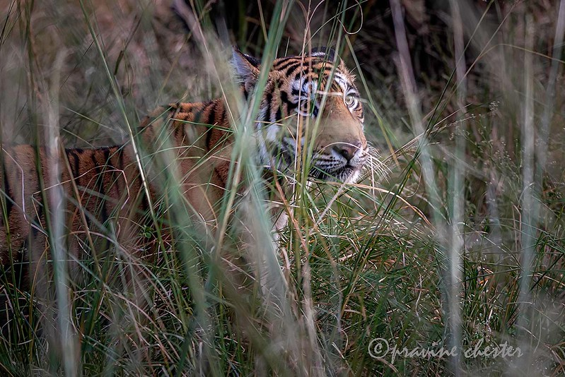 Peeping through the bush