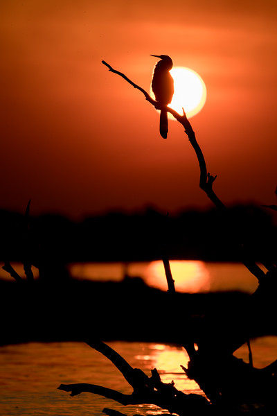 Botswana_June_2017 (6140 of 6179).jpg
