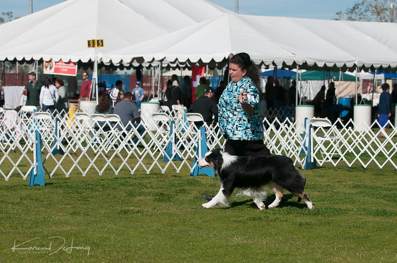 20170205_Australian Shepherds_Lost Dutchman Kennel Club-44.jpg