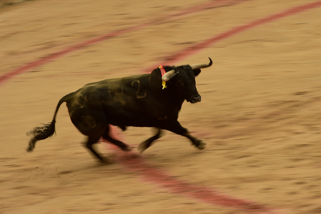 . A Puerto de San Lorenzo\'s bull enters in the bullring during the bullfight, at the San Fermin Festival, in Pamplona, northern Spain, Saturday, July 7, 2018. Revelers from around the world arrive in Pamplona every year to take part, during the eight days of the running of the bulls. (AP Photo/Alvaro Barrientos)
