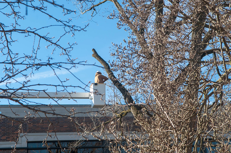 March 14, 2018 Big Tree8.JPG