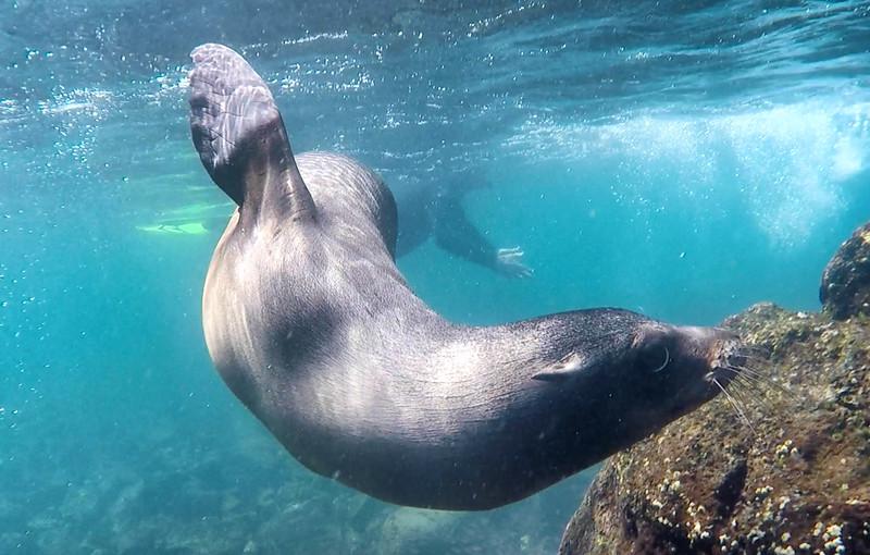 Sea Lion 5-2.jpg