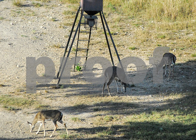 while-cwd-rates-low-biologists-consider-the-future