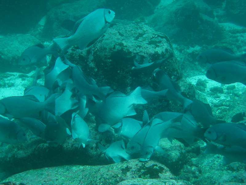 Diving in the Galapagos (340 of 392)