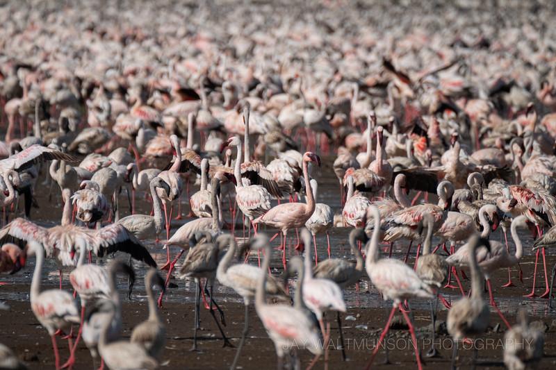 Jay Waltmunson Photography - Kenya 2019 - 098 - (DSCF2227).jpg