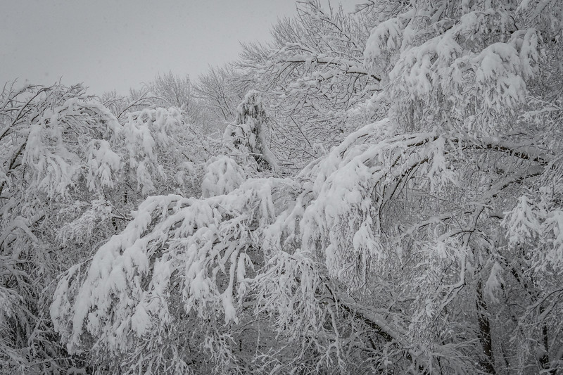 November 2018 Snowfall-_5009224.jpg