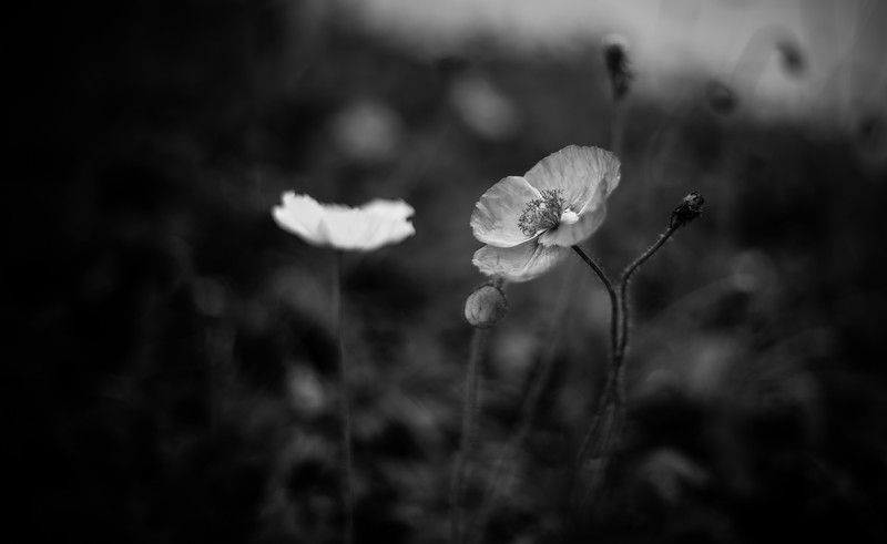 12_05_2014_Flower_BlackandWhite.jpg