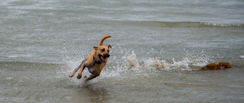 Laila Dog Beach in rain 10.4.15