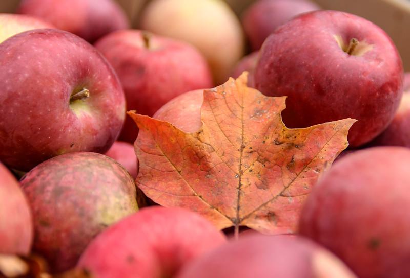harvest feast fall 201851.jpg