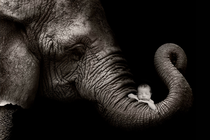 elephant-newport_babies_photography_newborn-9157.jpg