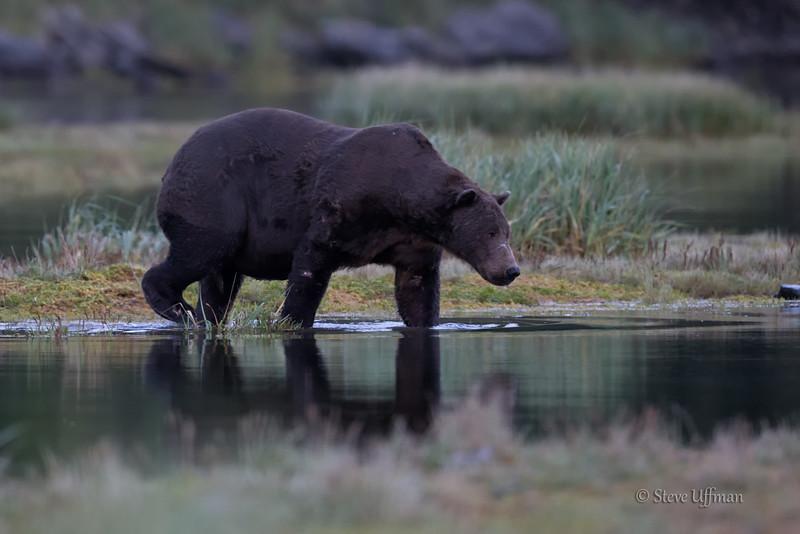 20140901-_G7Q0480Katmai-Bears-geographic-harbor-Edit.jpg