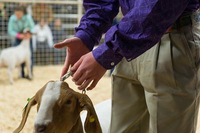 2016 Gerlach Livestock - Goats