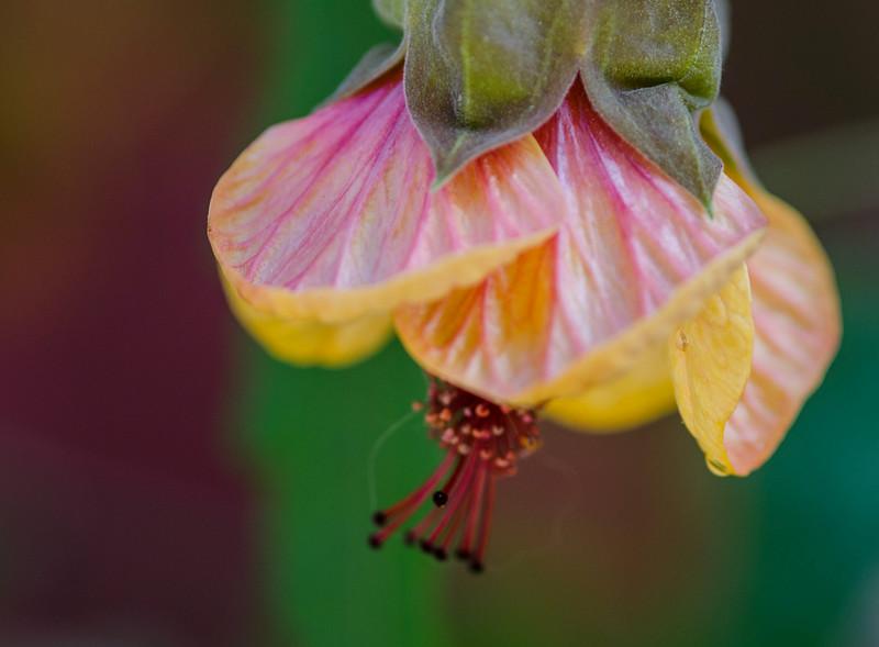 hanging flower.jpg