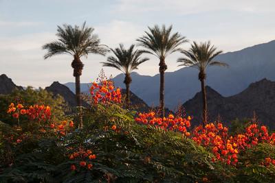 Palm Desert November 2018