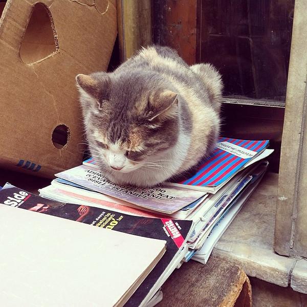 istanbul cat books