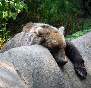 Zoo - June 28, 2008