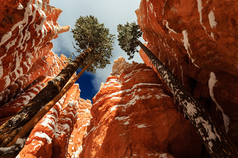 Bryce Canyon - DS - Wall Street - KCOT.jpg