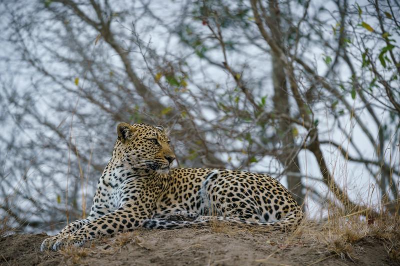 LeopardHills-20180929-0292.jpg