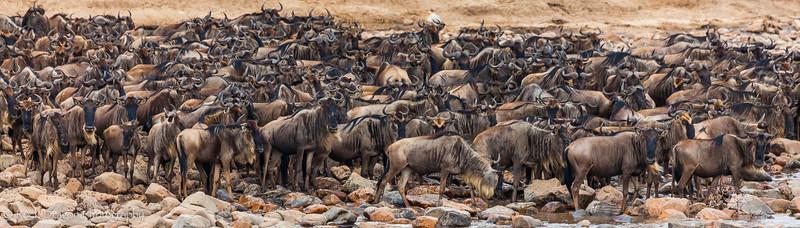 North_Serengeti-42.jpg