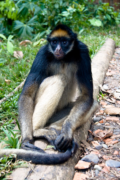 monkey-rescue-centre_4890158443_o.jpg