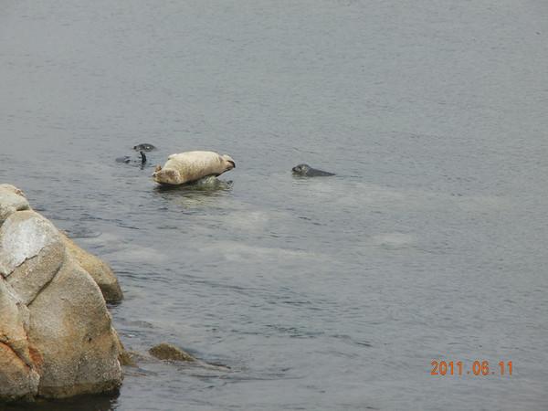 Monterey 2011/06/11
