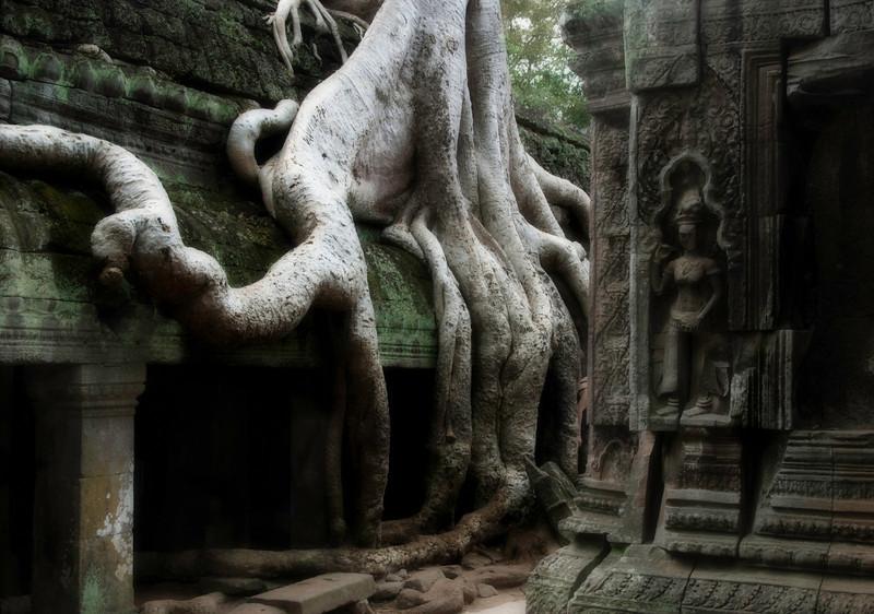 Banyan tree roots at the Jungle Temple