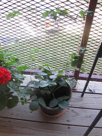 Garden Watch - Day 67