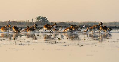 Bangweulu Wetlands, Zambia