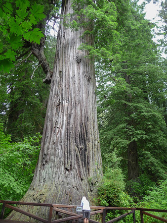 Redwoods and north to Oregon
