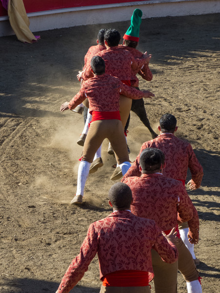 """High speed still sequence: (Next 12 photos) The Forcados go for a FOURTH try of """"pega de cara"""" with the same bull."""