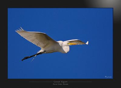 Avian Archive