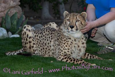 Cheetah Event 3/19/19 by Lani