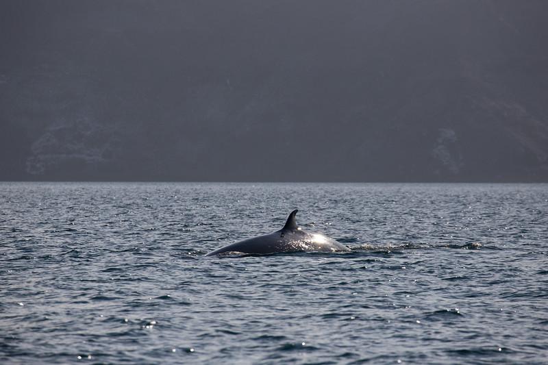 Baja-4459.jpg