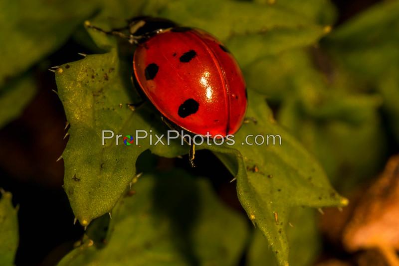 Lady Bugs Dallas Arboretum
