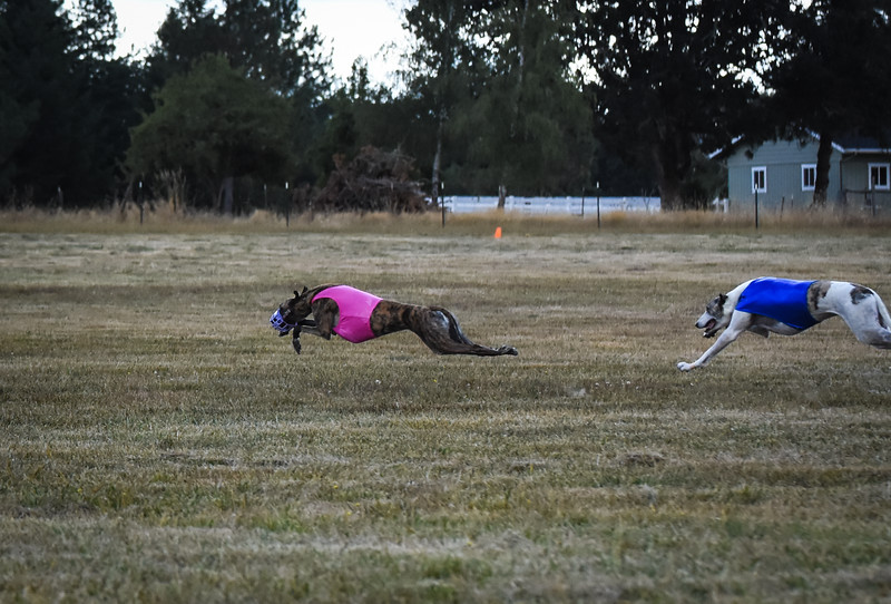 greyhound-12.jpg