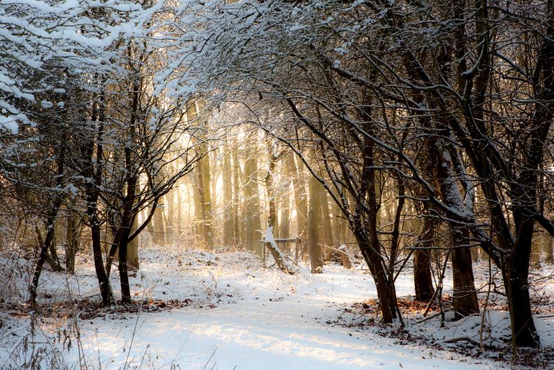 Snowy path 1.jpg