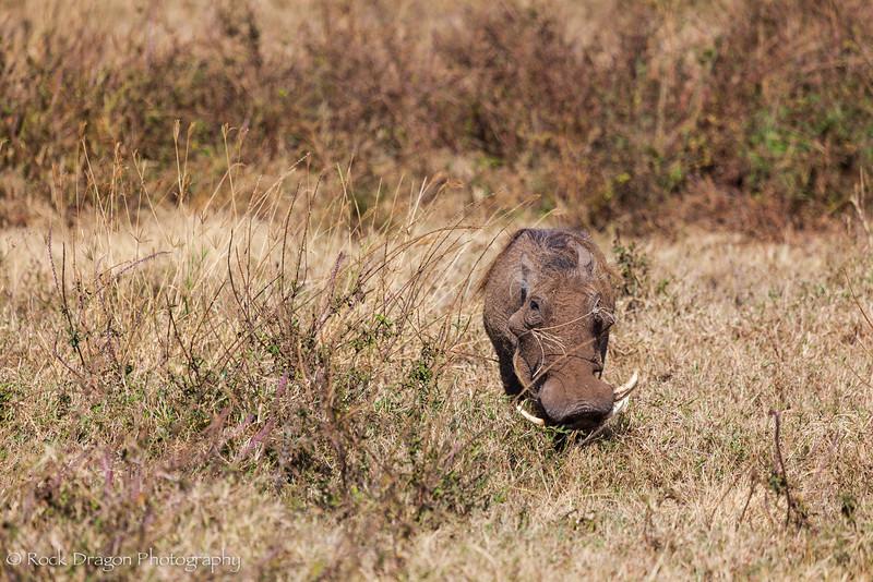 Ngorongoro-5.jpg