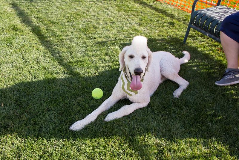 DogDays_Dogs_Gardens_2015_IMG_5384.jpg
